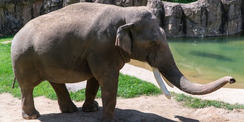 Xxx pictures of elephant with girls a huge collection of amazing photo 4